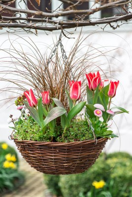 wpid17986-An-April-Hanging-Basket-QHAA092-nicola-stocken.jpg