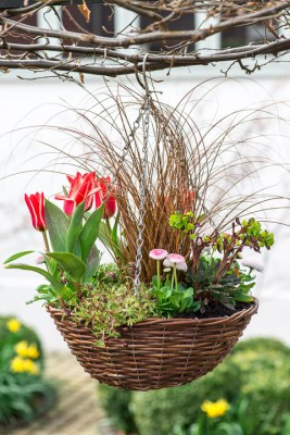 wpid17988-An-April-Hanging-Basket-QHAA093-nicola-stocken.jpg