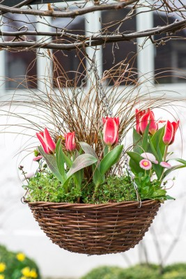 wpid17990-An-April-Hanging-Basket-QHAA094-nicola-stocken.jpg