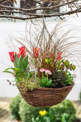 wpid17992-An-April-Hanging-Basket-QHAA095-nicola-stocken.jpg