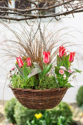 wpid17994-An-April-Hanging-Basket-QHAA096-nicola-stocken.jpg