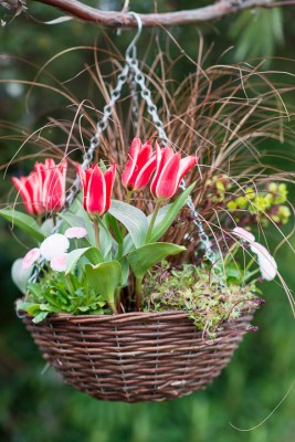 wpid17998-An-April-Hanging-Basket-QHAA098-nicola-stocken.jpg