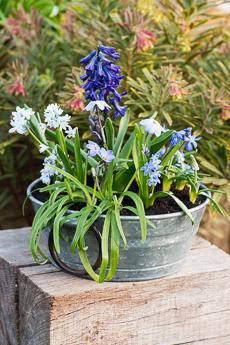 Thumbnail image for Planting an April Pot