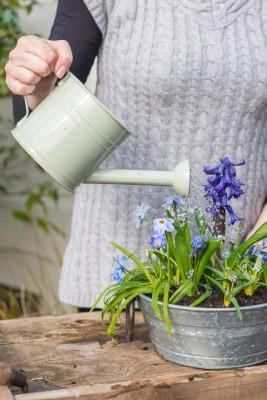 wpid18037-Planting-an-April-Pot-QCON259-nicola-stocken.jpg