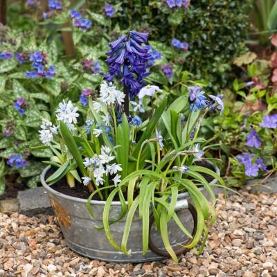 wpid18047-Planting-an-April-Pot-QCON264-nicola-stocken.jpg