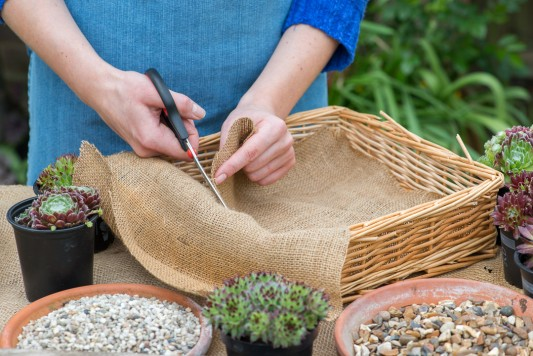 wpid18077-Planting-a-May-Charity-Find-QCON277-nicola-stocken.jpg