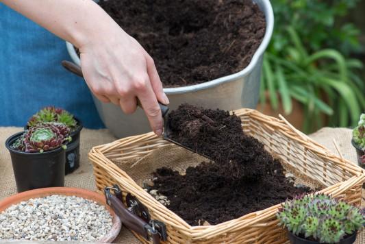 wpid18081-Planting-a-May-Charity-Find-QCON279-nicola-stocken.jpg