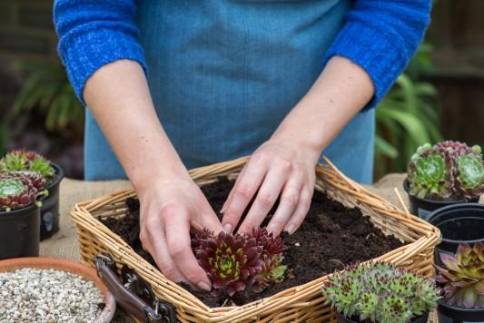 wpid18083-Planting-a-May-Charity-Find-QCON280-nicola-stocken.jpg