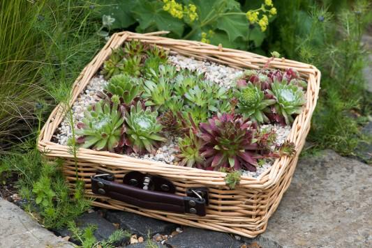wpid18101-Planting-a-May-Charity-Find-QCON289-nicola-stocken.jpg
