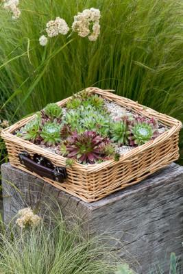 wpid18103-Planting-a-May-Charity-Find-QCON290-nicola-stocken.jpg