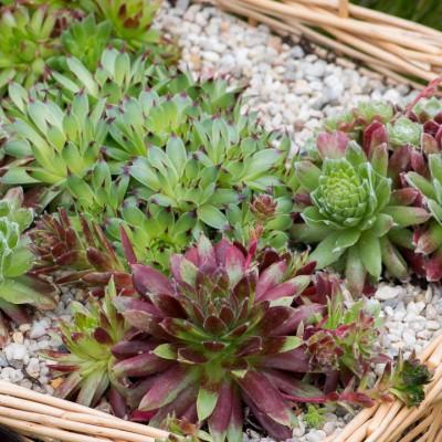 wpid18105-Planting-a-May-Charity-Find-QCON291-nicola-stocken.jpg