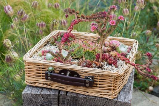 wpid18107-Planting-a-May-Charity-Find-QCON292-nicola-stocken.jpg