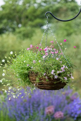 wpid18143-Hanging-Basket-in-May-QHAA122-nicola-stocken.jpg