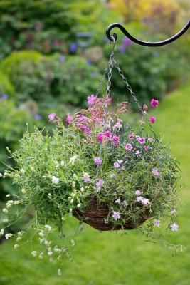 wpid18145-Hanging-Basket-in-May-QHAA124-nicola-stocken.jpg