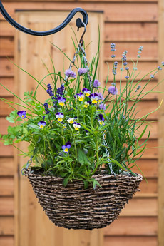 Thumbnail image for Herb Hanging Basket in June