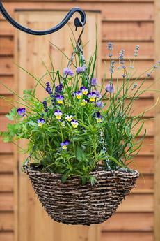 Thumbnail image for Herb Hanging Basket in June