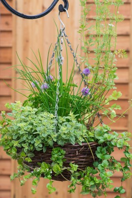 wpid18165-Herb-Hanging-Basket-in-June-QHAA132-nicola-stocken.jpg