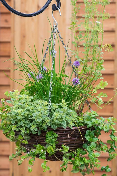 Herb Hanging Basket In June