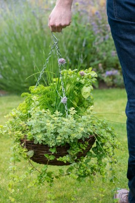 wpid18169-Herb-Hanging-Basket-in-June-QHAA134-nicola-stocken.jpg