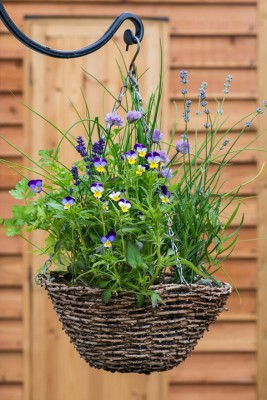 wpid18179-Herb-Hanging-Basket-in-June-QHAA141-nicola-stocken.jpg