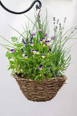wpid18181-Herb-Hanging-Basket-in-June-QHAA142-nicola-stocken.jpg