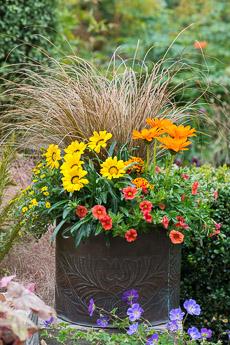 Thumbnail image for Planting a July Hot Pot
