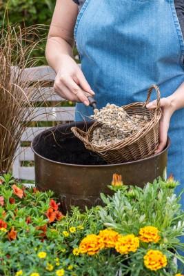 wpid18187-Planting-a-July-Hot-Pot-QCON293-nicola-stocken.jpg