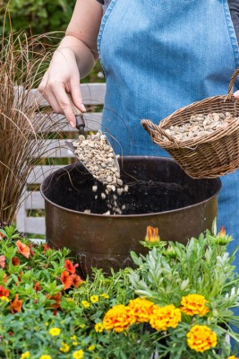 wpid18189-Planting-a-July-Hot-Pot-QCON294-nicola-stocken.jpg
