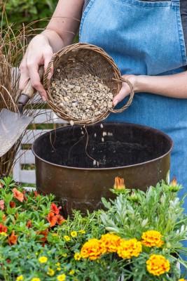 wpid18191-Planting-a-July-Hot-Pot-QCON295-nicola-stocken.jpg
