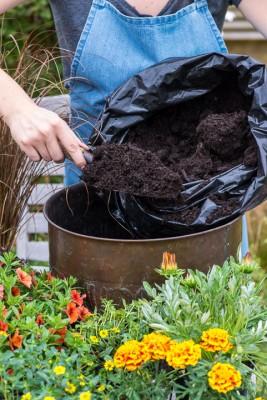 wpid18193-Planting-a-July-Hot-Pot-QCON296-nicola-stocken.jpg