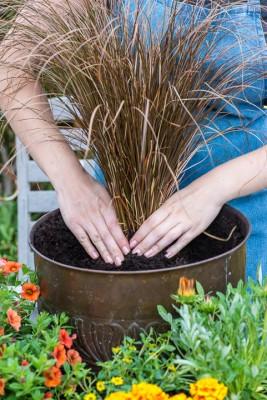 wpid18195-Planting-a-July-Hot-Pot-QCON297-nicola-stocken.jpg