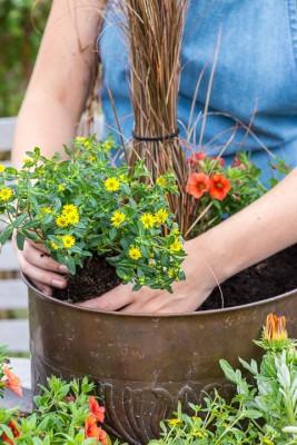 wpid18201-Planting-a-July-Hot-Pot-QCON300-nicola-stocken.jpg