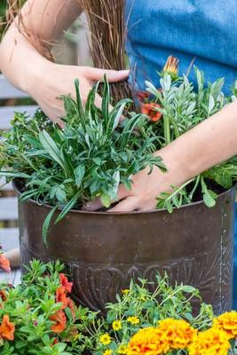 wpid18203-Planting-a-July-Hot-Pot-QCON301-nicola-stocken.jpg