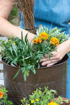 wpid18205-Planting-a-July-Hot-Pot-QCON302-nicola-stocken.jpg
