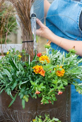 wpid18209-Planting-a-July-Hot-Pot-QCON304-nicola-stocken.jpg