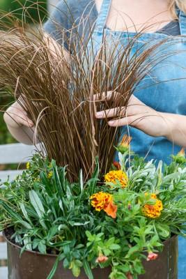 wpid18213-Planting-a-July-Hot-Pot-QCON306-nicola-stocken.jpg