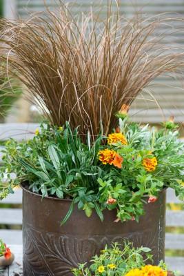 wpid18215-Planting-a-July-Hot-Pot-QCON307-nicola-stocken.jpg