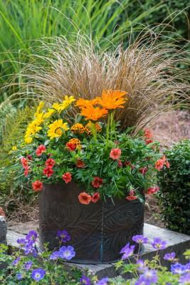 wpid18219-Planting-a-July-Hot-Pot-QCON309-nicola-stocken.jpg