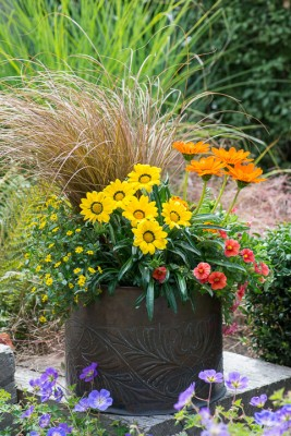 wpid18221-Planting-a-July-Hot-Pot-QCON310-nicola-stocken.jpg