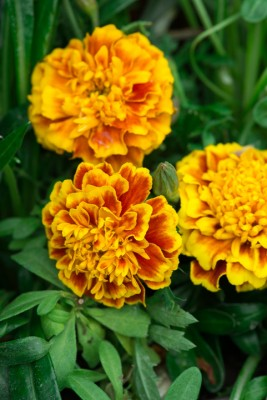 wpid18223-Planting-a-July-Hot-Pot-QCON311-nicola-stocken.jpg