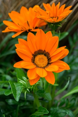 wpid18225-Planting-a-July-Hot-Pot-QCON312-nicola-stocken.jpg