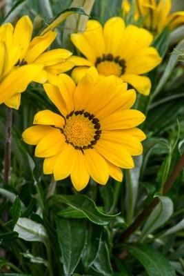 wpid18227-Planting-a-July-Hot-Pot-QCON313-nicola-stocken.jpg