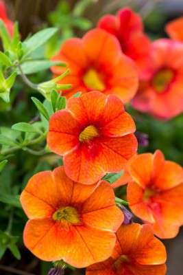 wpid18229-Planting-a-July-Hot-Pot-QCON315-nicola-stocken.jpg