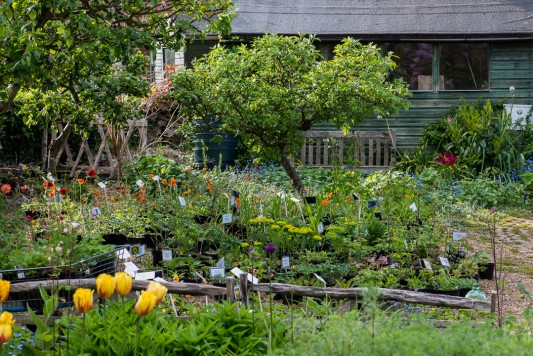 wpid18307-Brickwall-cottage-in-april-GBRI038-nicola-stocken.jpg