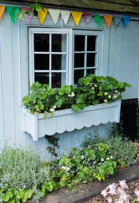 wpid18383-Family-Garden-in-May-GHST055-nicola-stocken.jpg