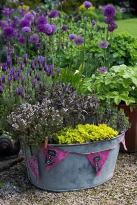 wpid18403-Family-Garden-in-May-GHST077-nicola-stocken.jpg