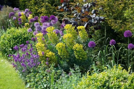 wpid18407-Family-Garden-in-May-GHST082-nicola-stocken.jpg