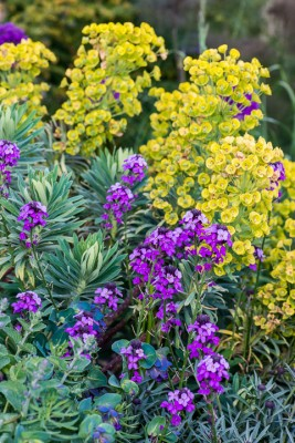 wpid18411-Family-Garden-in-May-GHST085-nicola-stocken.jpg