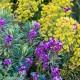 wpid18411-Family-Garden-in-May-GHST085-nicola-stocken.jpg thumbnail