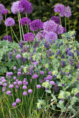 wpid18413-Family-Garden-in-May-GHST087-nicola-stocken.jpg